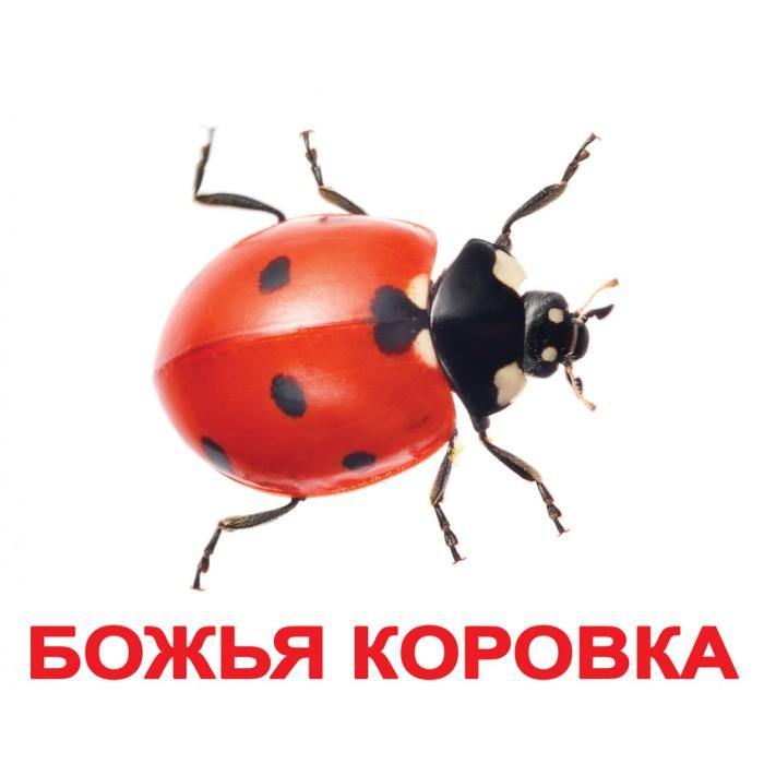 Карточки большие русские с фактами «Насекомые» 20шт