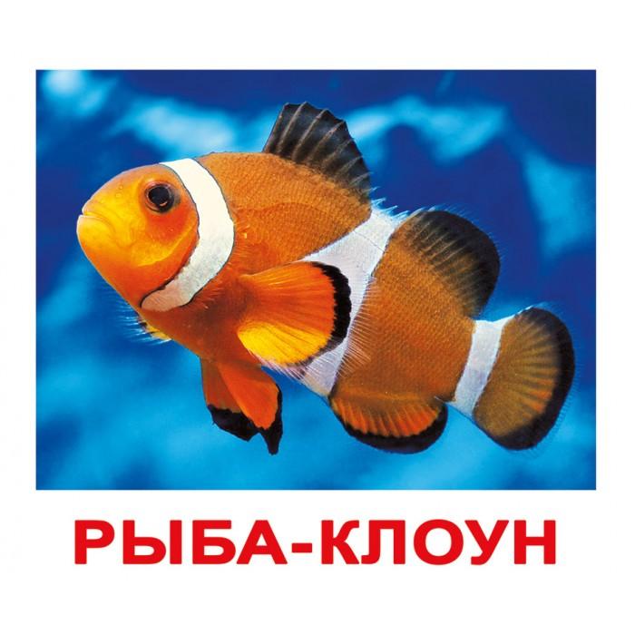 Карточки большие русские с фактами «Обитатели воды» 20шт