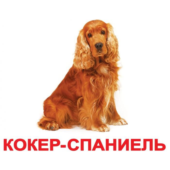 Карточки большие русские с фактами «Породы собак» 20шт