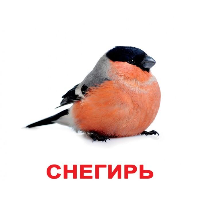 Карточки большие русские с фактами «Птицы» 20шт