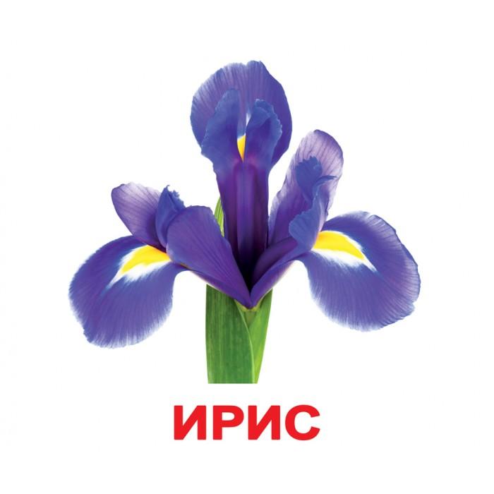 Карточки большие русские с фактами «Цветы» 20шт