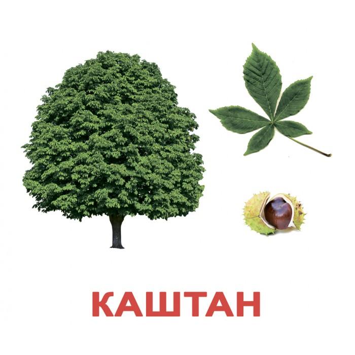 Карточки большие русские с фактами, ламинированные «Деревья»