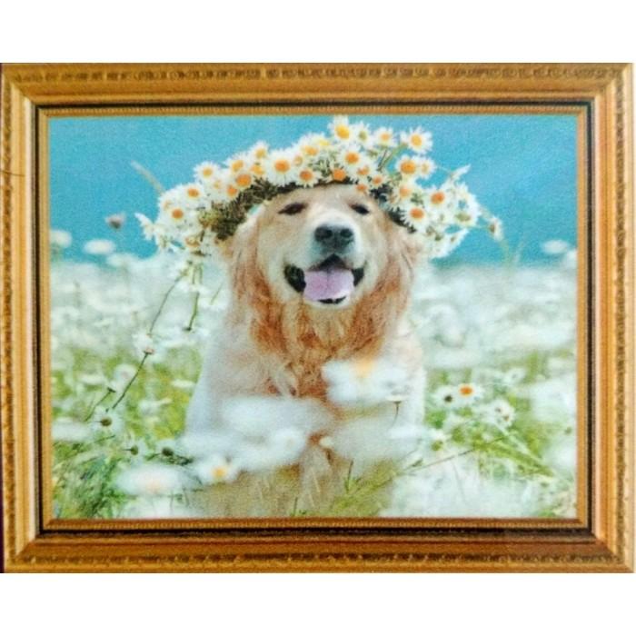 Алмазная мозаика «Пес в ромашках» 30*40см, с рамкой
