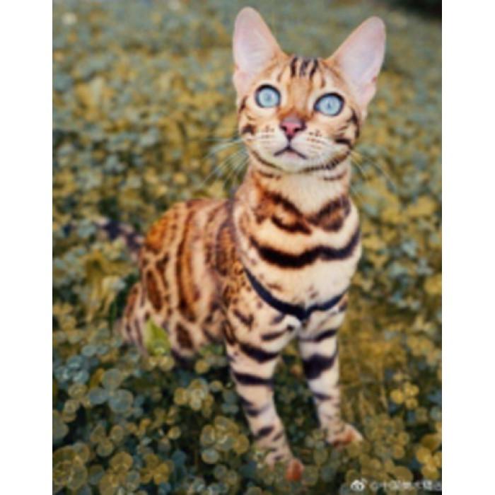 Алмазна мозаїка «Бенгальська кішка» 30 * 40см, з рамкою