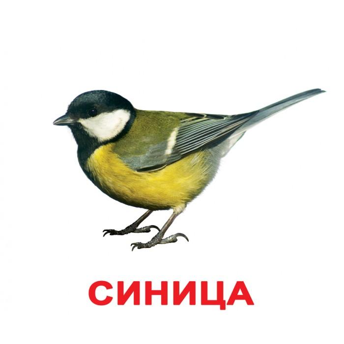 Карточки большие русские с фактами, ламинированные «Птицы»