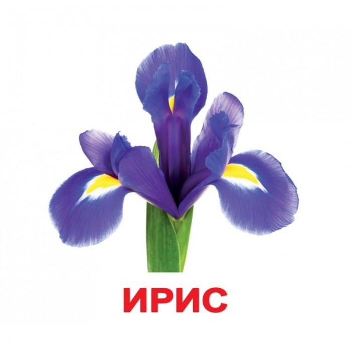 Карточки большие русские с фактами, ламинированные «Цветы»