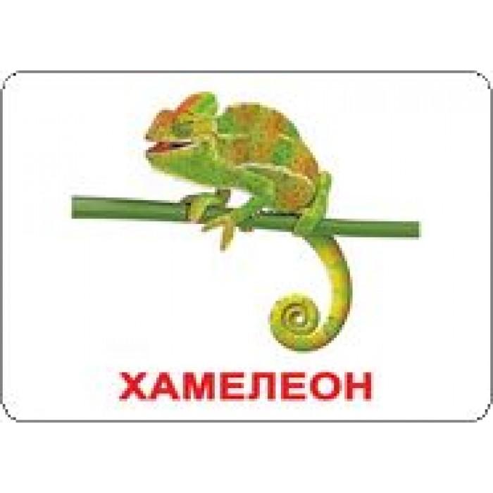 Карточки большие русские с фактами «Экзотические животные»