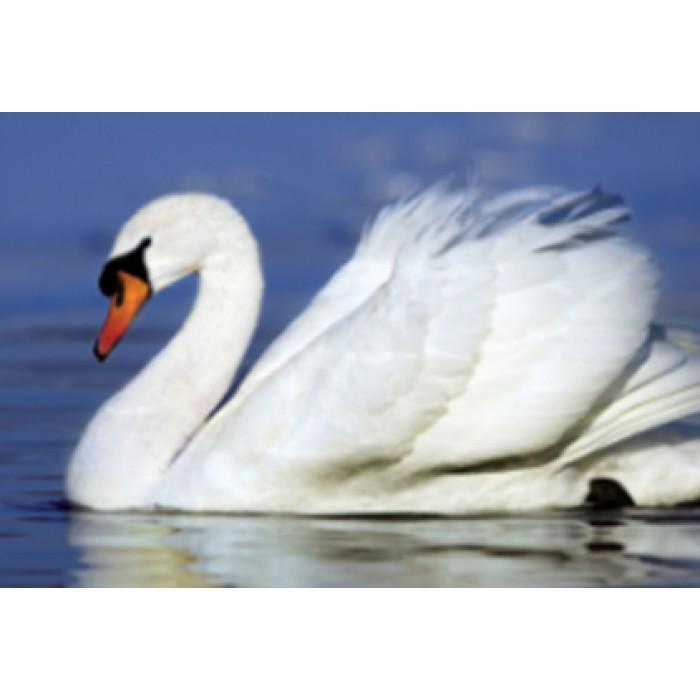 Алмазная мозаика «Белый лебедь», 30*40см, с рамкой