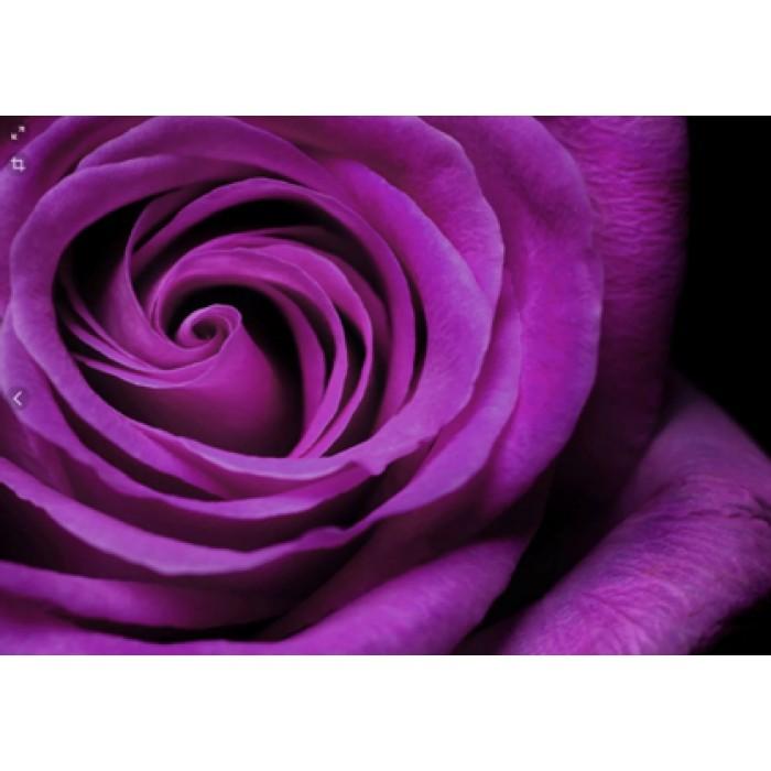 Алмазная мозаика «Дивная роза», 30*40см, с рамкой
