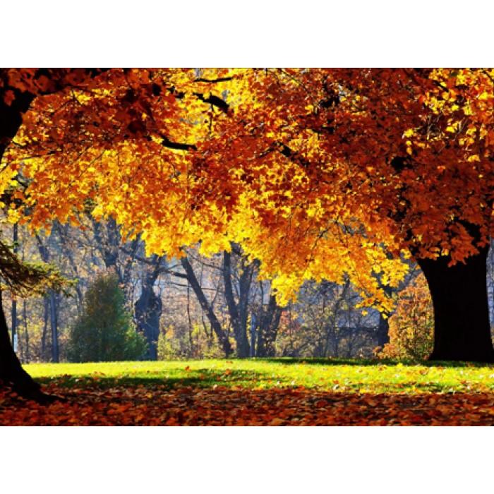 Алмазная мозаика «Осенний парк 2», 30*40см, с рамкой