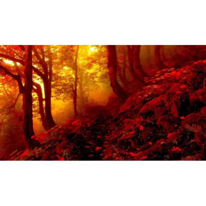Алмазная мозаика «Закат в лесу», 30*40см, с рамкой