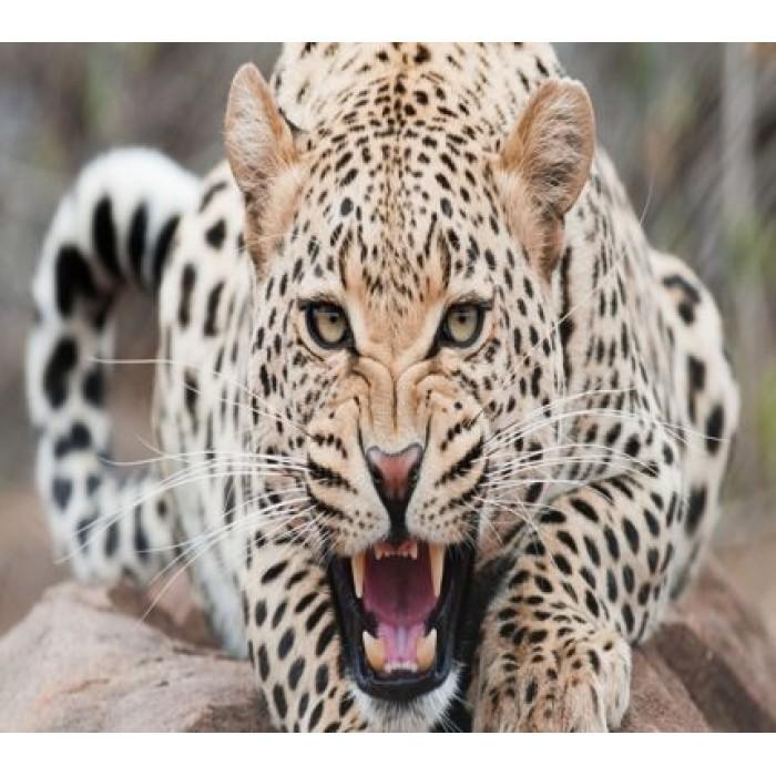 Алмазная мозаика «Разгневанная кошка», 30*40см, без рамки