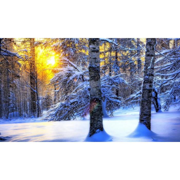 Алмазная мозаика «Белый лес», 30*40см, без рамки