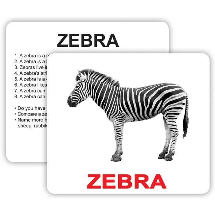 Карточки большие англ.«Wild animals with facts» ламин., 30шт
